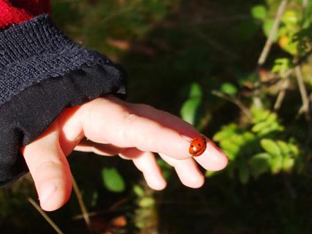 Kinderhand | Foto: Randi Flachsbart
